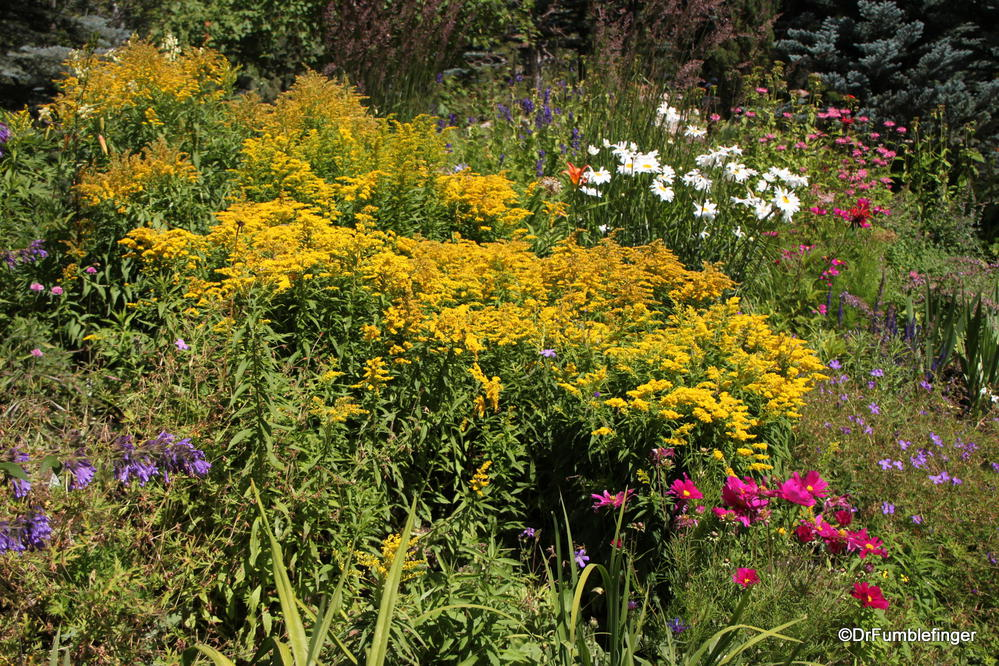 A Stroll Through The Betty Ford Alpine Gardens Vail Travelgumbo