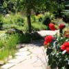 Mountain Perennial Garden, Betty Ford Alpine Garden, Vail