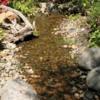 Stream, Betty Ford Alpine Garden, Vail
