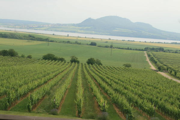 IMG_5422 Wine farm, South Moravia 22.06.2013