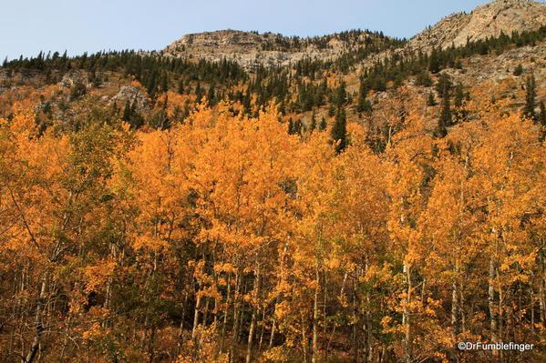 Fall colors, Kananaskis Country