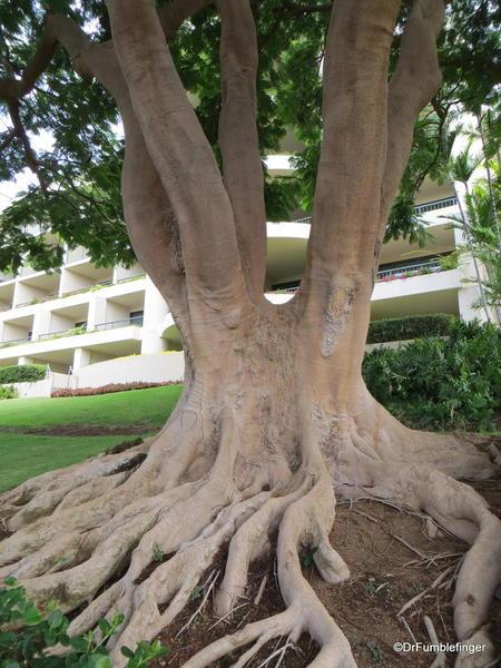 Landscaping, Hapuna Beach Prince Resort