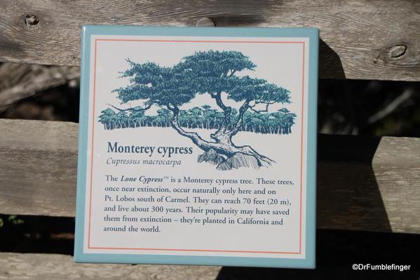 Seventeen Mile Drive, Monterey Cypress