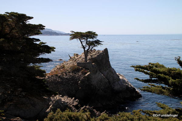 Seventeen Mile Drive, Lone Cypress