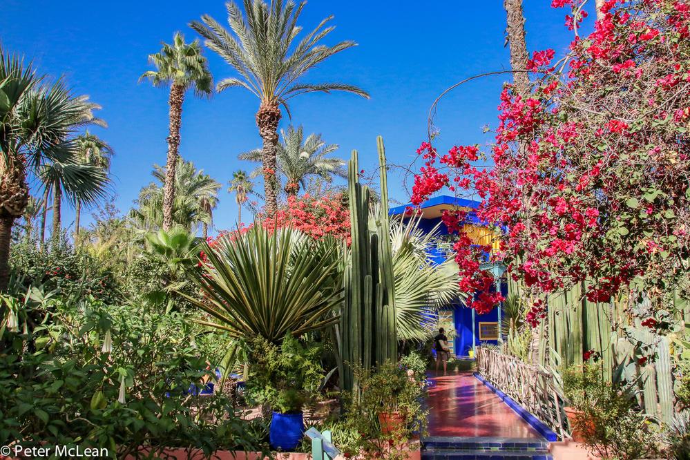 majorelle 1 - Majorelle Garden