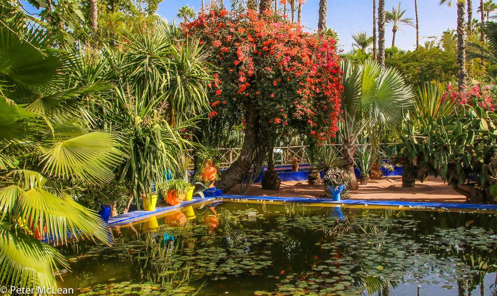 Majorelle Garden Marrakech Travelgumbo