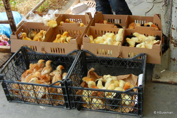 Istambul 2014 026 Entry to - The Kadikoy Tuesday Market (Ka