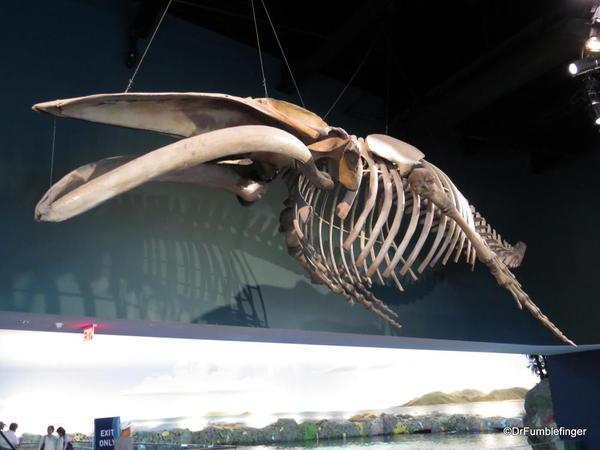 Whale Skeleton, Interior entry to Ripley's Aquarium of Canada, Toronto