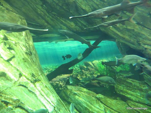 Great Lakes Exhibit, Canadian Waters Gallery, Ripley's Aquarium of Canada, Toronto