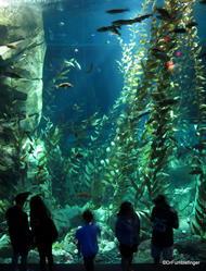 Pacific Kelp Exhibit, Canadian Waters Gallery, Ripley's Aquarium of Canada, Toronto