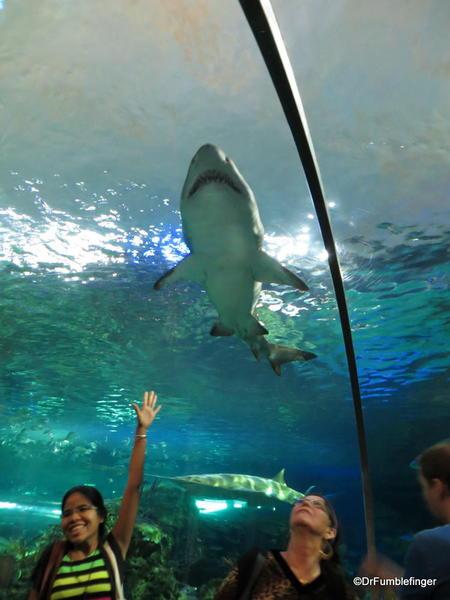 Dangerous Lagoon's tunnel and moving walkway, Ripley's Aquarium of Canada, Toronto