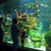 Rainbow Reef Gallery,  Ripley's Aquarium of Canada, Toronto