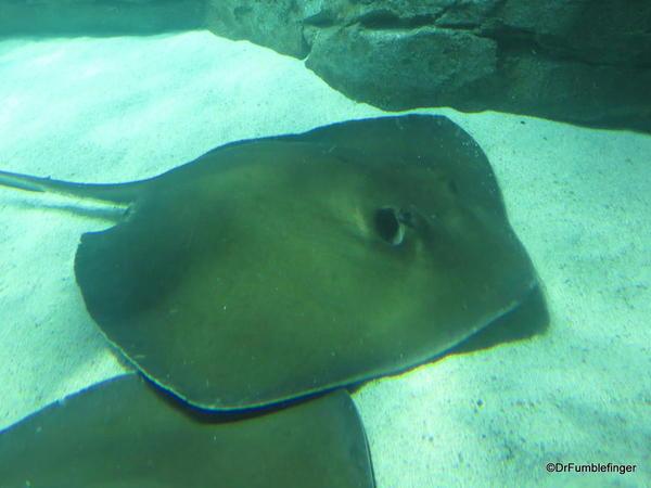 Ray Bay Gallery, Ripley's Aquarium of Canada, Toronto