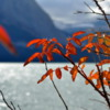 Fall Colors, Upper Kananakis Lake, Alberta