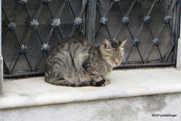 Feral cat in Buenos Aires' Recoleta Cemetery