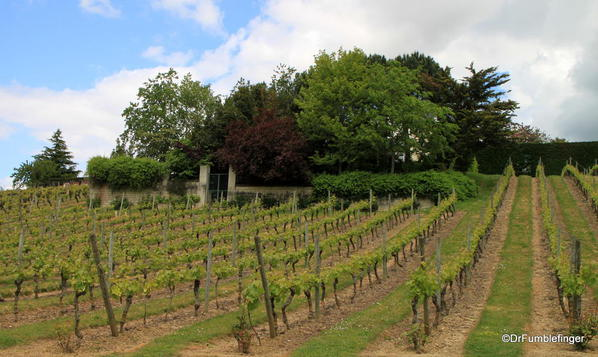 Vineyard, Chinon