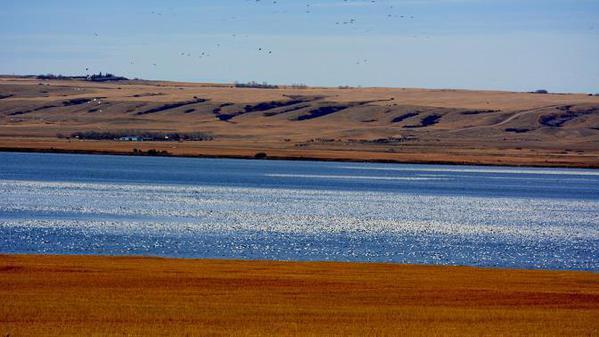 Snow-Goose-lake-3cs