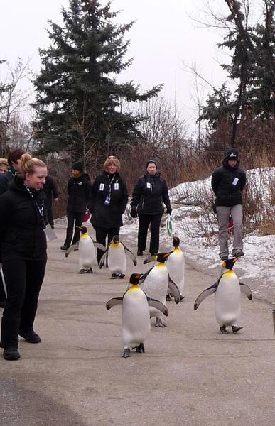 01 Calgary Zoo