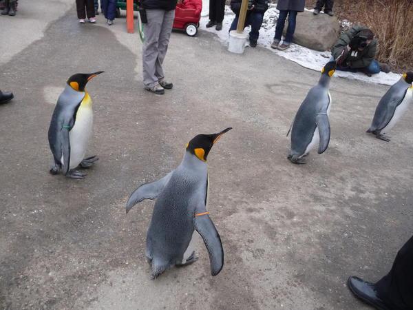 02 Calgary Zoo