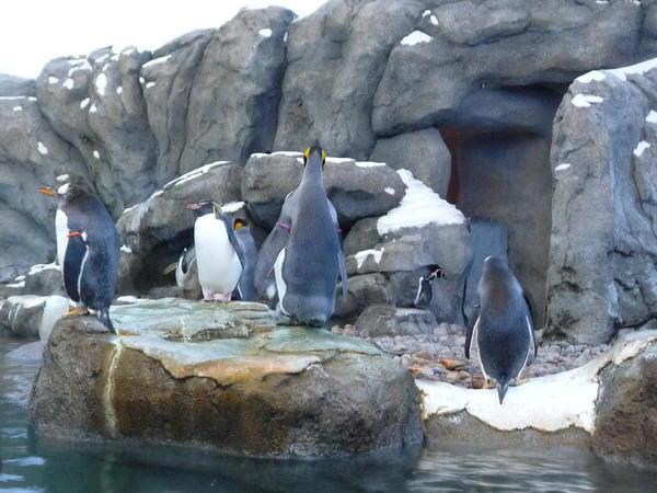 03 Calgary Zoo