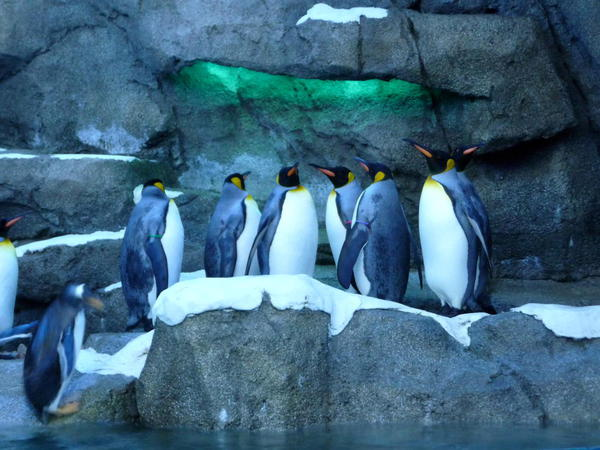 04 Calgary Zoo