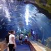 Inside the Oceanografic