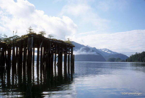 Abandoned railway bridge, Moresby Island. Used to harvest sitka spruce trees, important in the manufacture of planes in WWII