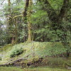 Louise Island Rainforest, Haida Gwaii