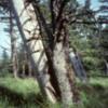 Louise Island, Haida Gwaii, Skedans Village Totems