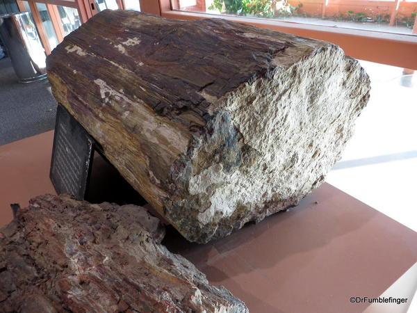 Petrified wood in the Visitor Center, Valley of Fire State Park
