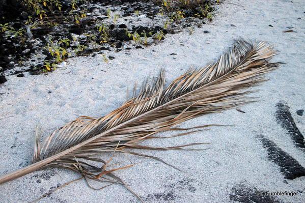 Fallen palm frond, Pu`uhonua O Hōnaunau National Historical Park