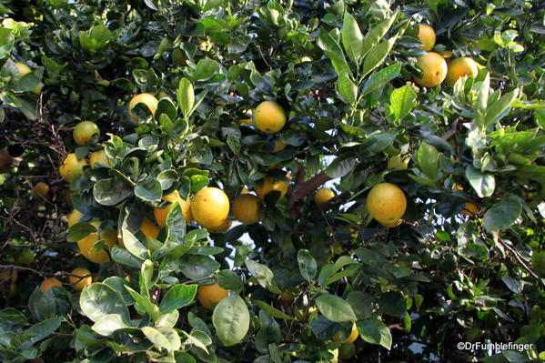 Oranges, Greenwell Farms Coffee Tours
