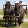 Bar U Ranch Cowboy and his wagon