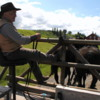 Bar U Ranch Cowboy and his wagon