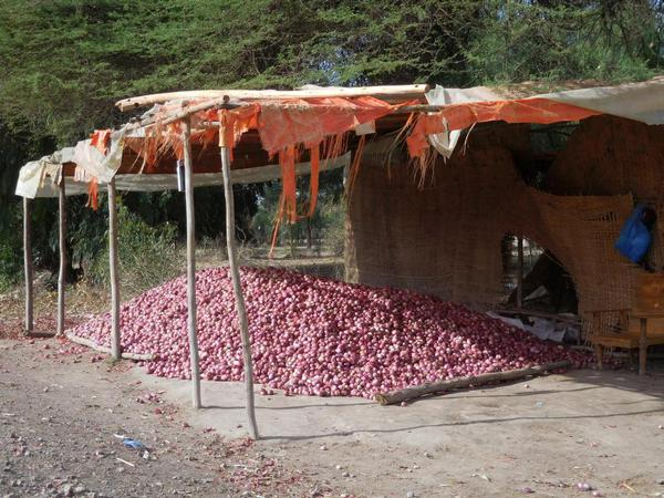 A huge mound of onions