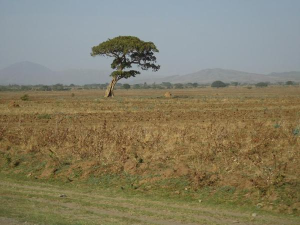 Land under cultivation. The plowing has been done, but no crops growing yet