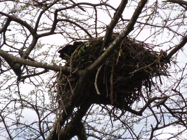 Tree nests in Abiata National Park