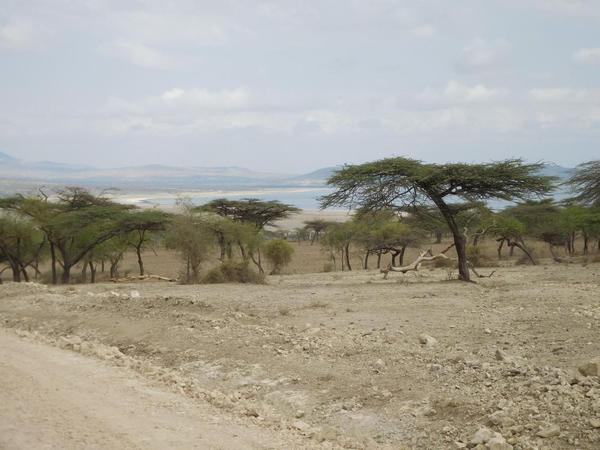 Abiata National Park. View of the lake