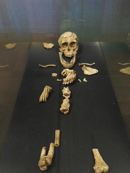 2015-05 Ethiopian National Museum 20 Australopithicus Salem Child