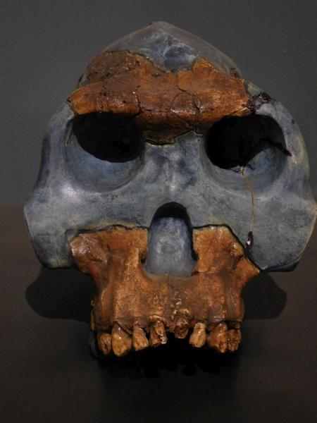 2015-05 Ethiopian National Museum 23 Homo Rhodesiensis