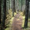 Pesuta Shipwreck Trail, Haida Gwaii