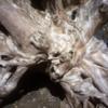 Driftwood art, Cape Bell River Camp.  East Beach Trail, Haida Gwaii