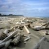 The fallen forest of driftwood.  East Beach Trail, Haida Gwaii
