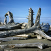 East Beach Trail, Haida Gwaii