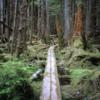 Cape Fife trail.  East Beach Trail, Haida Gwaii