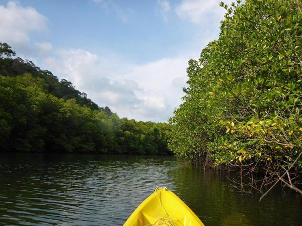 16. Kayaking in the mangroves, Kohn Kod, Thailand