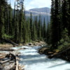 Yoho Valley -- Little Yoho River.  Downriver from Laughing Falls