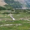 Glacier National Park -- Hidden Lake Trail