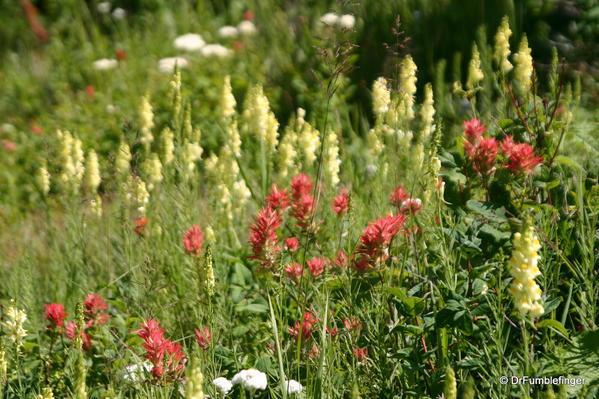 Glacier National Park -- Wildflowers