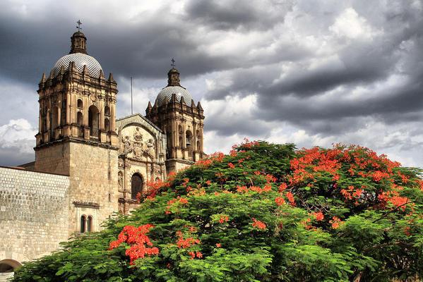1280px-Florecer_en_Oaxaca